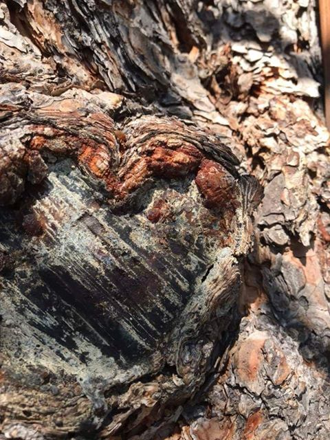RN, Amanda M., finds a heart-shaped tree knot in Durango, Co.